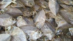 Best Quality Slim Mouth Fish For Sale